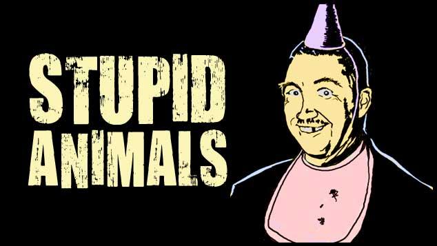 Stupid Animals
